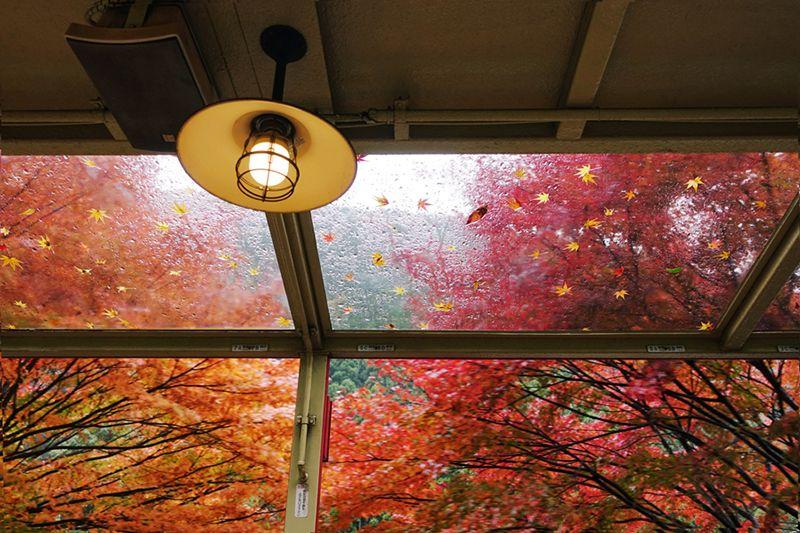 Fall Indoor light